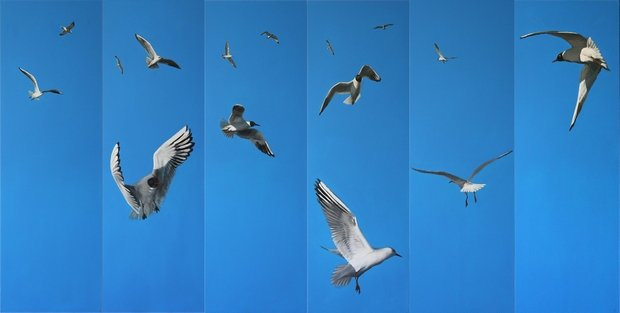 MOUETTES ET GOELANDS par HUGO H dans 07 Peinture & Dessins Mouettes1