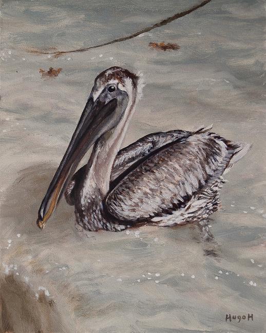 Pelican-650
