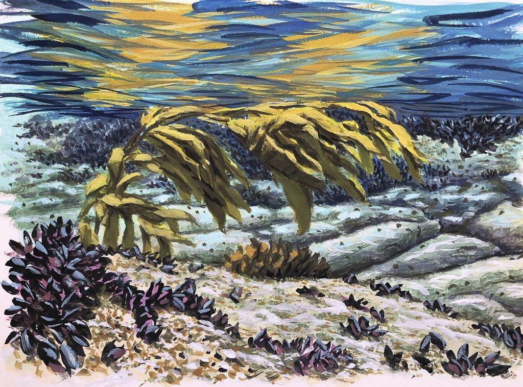 1 Kelp
