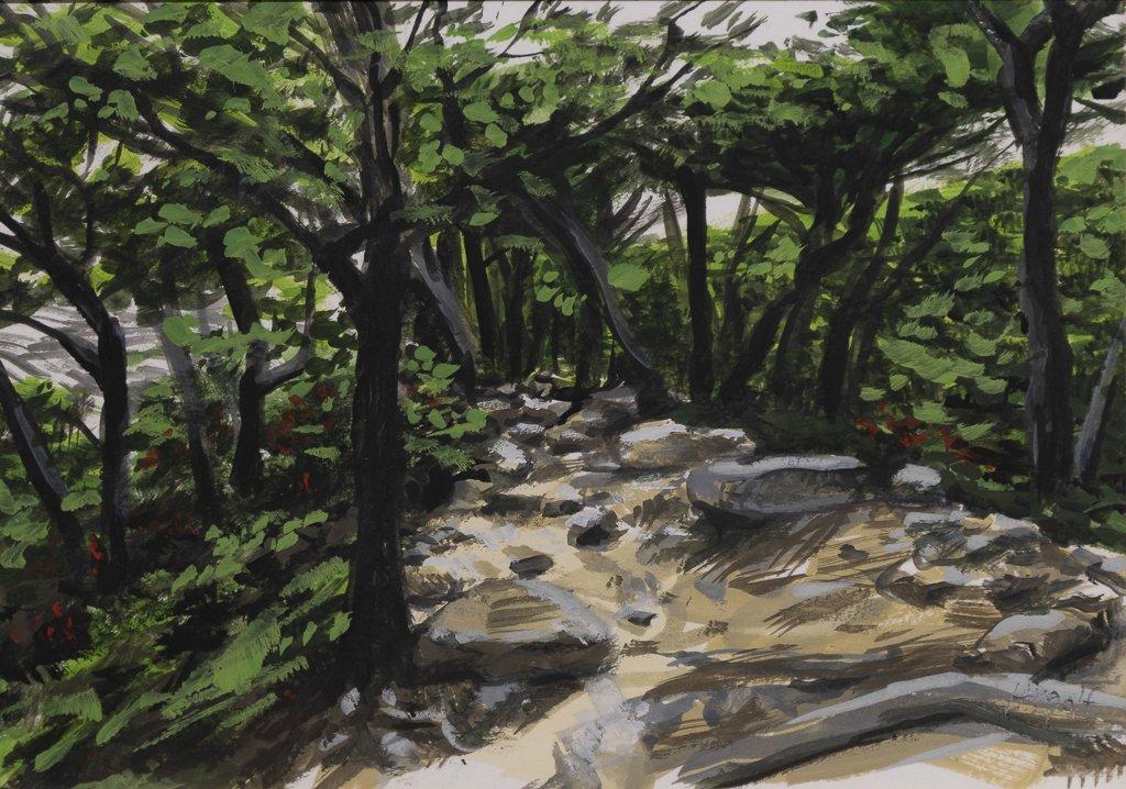 2 6 Forêt sur une crête de la Valle del Frances